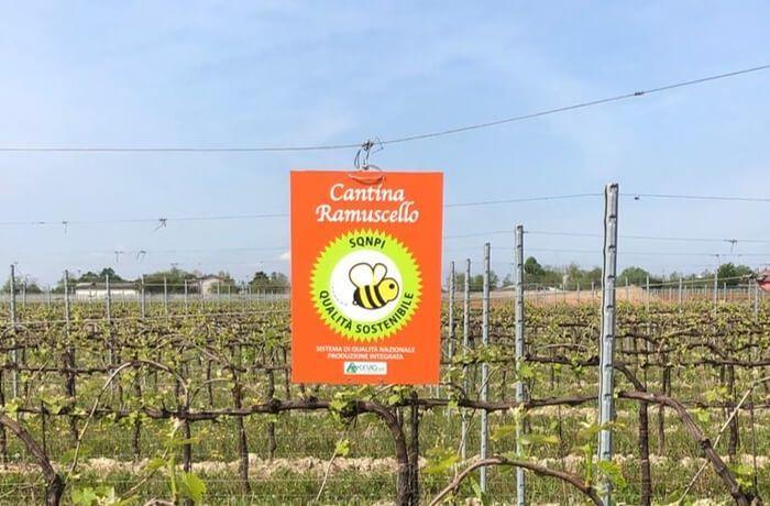 Bees in the Vineyard