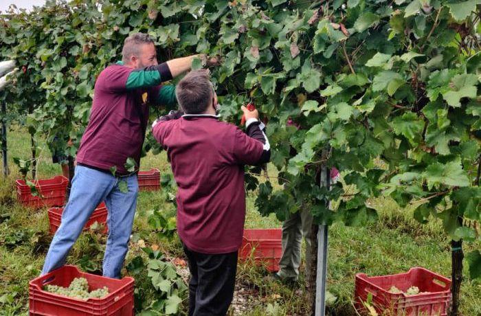 Solidarity harvest with Futura Social Cooperative