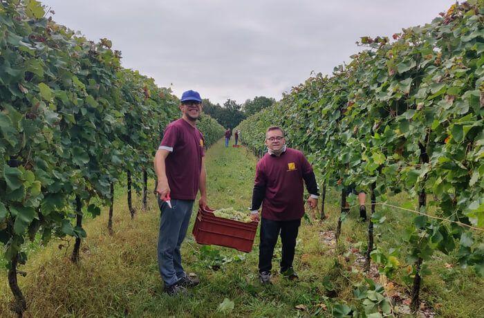 Solidarity harvest